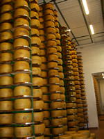 The making of Parmagiano Reggiano